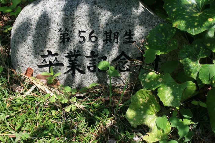image_56