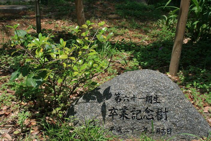 image_61